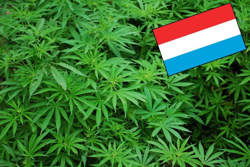 Buy Marijuana in Luxembourg
